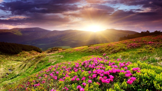 sunset_in_flower_field-1920x1080